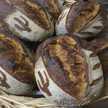 Tucson's Barrio Bread - Loaves of Desert Durum